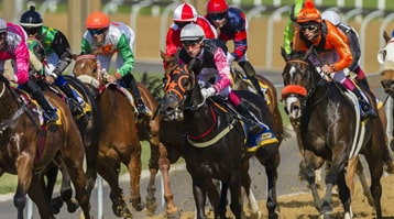 horses racing evenly positioned